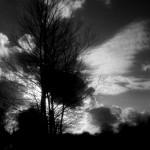 arbrenb